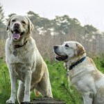 What to expect as your dog grows old.
