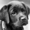 Parenting and Raising your Perfect Puppy